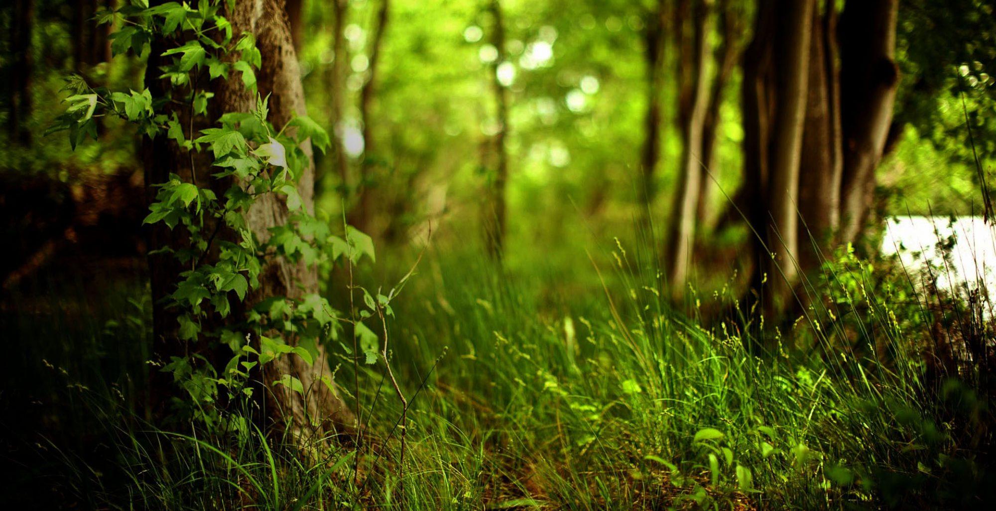 Soluções ambientais com conhecimento e experiência.